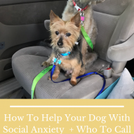 How To Help Your Dog With Social Anxiety  + Who To Call To Patch The Walls