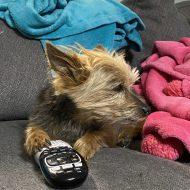 DIY Pet Toys- Cats & Dogs 3: Paws Unite!